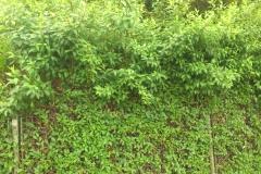 plot1 před stříhem