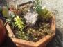 Výsadba květináče