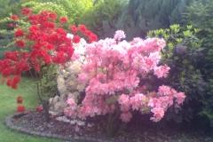 výsadba plot v květu