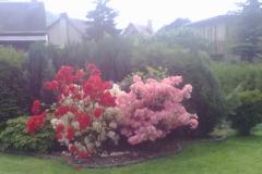 vzorová výsadba - plot v květu (1)