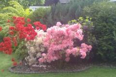 vzorová výsadba - plot v květu (2)