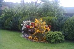 vzorová výsadba - plot v květu (6)