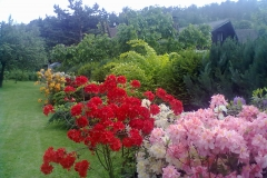 vzorová výsadba - plot v květu (8)