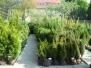 Zahradnictví v sezoně