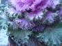 Zimní květináče